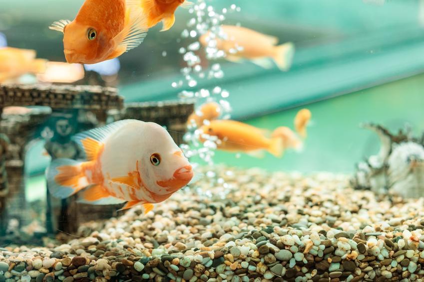 Napowietrzanie wody w akwarium z rybkami oraz polecany napowietrzacz do akwarium