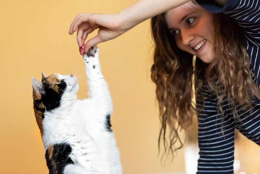 Kobieta nagradzająca kota, a także instrukcje, jak wytresować kota domowego