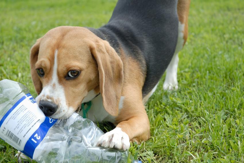 Pies bawiący się na trawie butelką oraz porady jak zrobić zabawkę dla psa krok po kroku