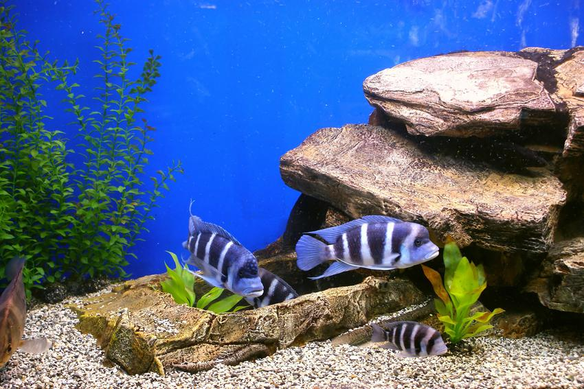 Dekoracyjne kamienie do akwarium z rybkami, a także kamień napowietrzający i inne