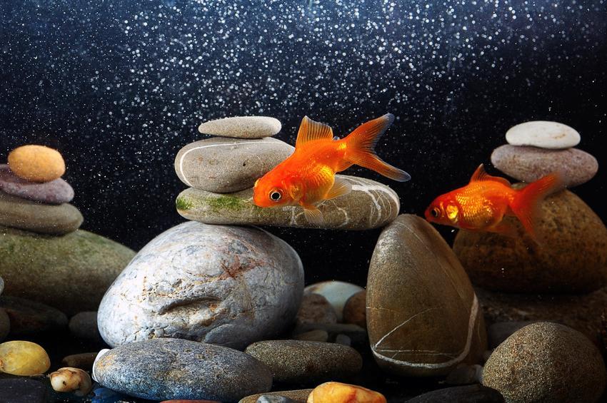 Rybki i kamienie do akwarium w akwarium, a także rodzaje kamieni