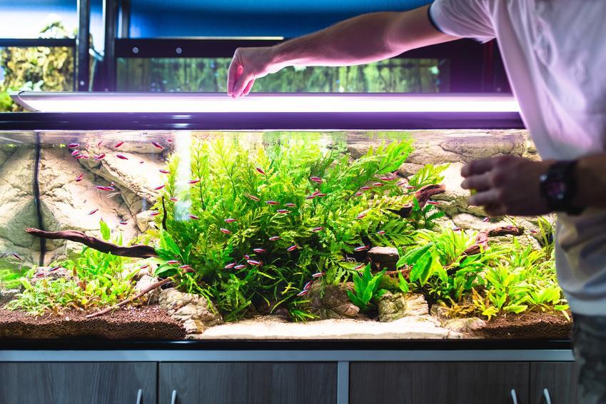Mężczyzna karmiący rybki oraz porady, jak urządzić akwarium, w tym duże i małe akwarium