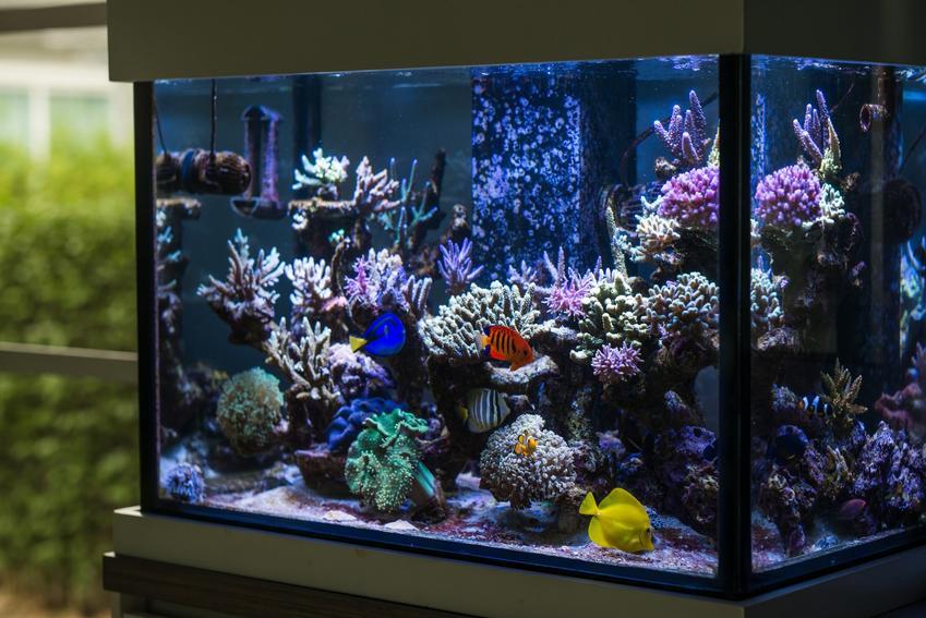 Akwarium z rybkami oraz porady, jak urządzić akwarium i aranżacja akwarium krok po kroku