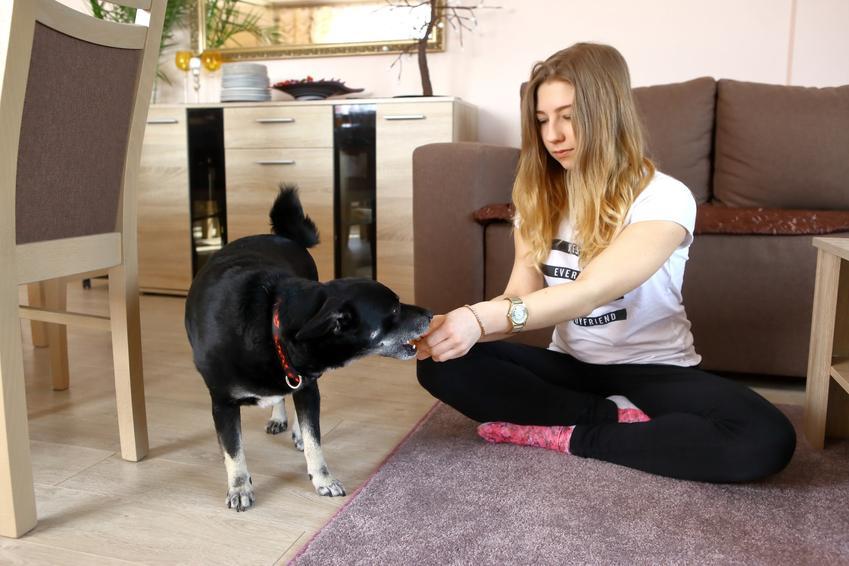 Kobieta podczas tresury psa, a także porady, jak oduczyć psa gryzienia wszystkiego wokół i po rękach