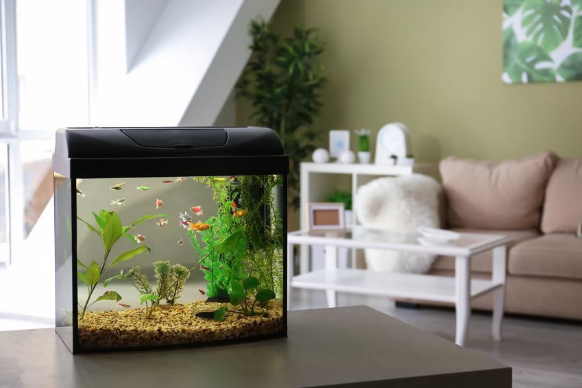 Akwarium na pierwszym planie w salonie oraz porady, jaka woda do akwarium i woda dla rybek