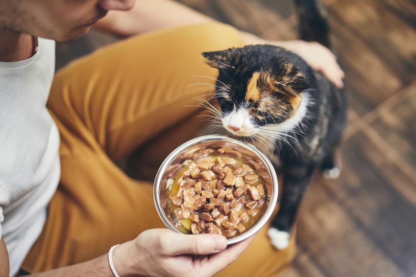 Kot podczas karmienia przez właściciela, a także informacje, ile powinien jeść kot