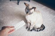 Jakie tabletki uspokajające dla kota działają najlepiej? Oto popularne produkty