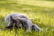 Jak ulżyć kotu podczas upału? TOP 5 sposobów na ochłodzenie kota