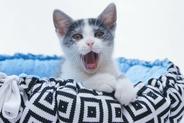 Jakie posłanie dla kota jest najlepsze? Wybieramy funkcjonalne legowisko