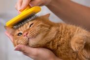 Grzebień czy szczotka dla kota – czym lepiej czesać kota?