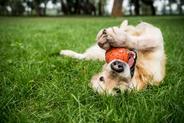 Jak nazwać psa? 10 świetnych propozycji imion dla psów
