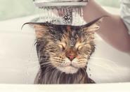 Kąpanie kota krok po kroku. Zobacz, jak zadbać o czystość pupila