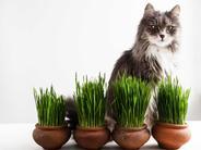 Trawa dla kota – rodzaje, ceny, uprawa, zastosowanie