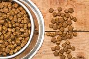 Jaka jest najlepsza sucha karma dla psa? Oto popularne produkty