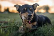 TOP 3 naturalne gryzaki dla psa. Zobacz, co wybrać dla swojego pupila