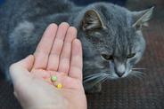 Tabletki na odrobaczenie kota - ceny, opinie, polecane preparaty