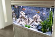 Jakie rybki do akwarium? 10 gatunków dla początkujących