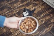 Karma dla kota Butchers – rodzaje, opis, ceny, opinie