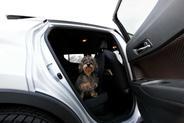 Fotelik samochodowy dla psa i siedzisko samochodowe dla psa – opis produktów