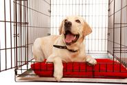 Klatka kennelowa dla psa – opis, zastosowanie, ceny, opinie