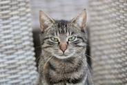 Jak oduczyć kota sikania poza kuwetą?