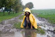 Płaszcz przeciwdeszczowy dla psa – rodzaje, ceny, porady