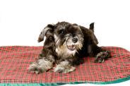 Mata chłodząca dla psa – rodzaje, ceny, opinie, porady