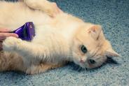 Furminator dla kota – modele, działanie, ceny, opinie