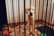 Jak zbudować kojec dla psa w domu i w ogrodzie? Wyjaśniamy