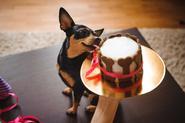 Z czego zrobić tort dla psa? Oto 3 najlepsze pomysły