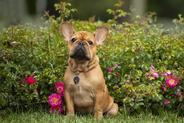 Adresówka dla psa – rodzaje, ceny, porady użytkowników