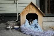 Buda dla psa ocieplana - rodzaje, wymiary, ceny, porady