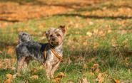 Szelki dla psa Trixie, Julius i Guard – którą uprząż wybrać?