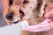 Pasta do zębów dla psa - rodzaje, ceny, opinie, porady