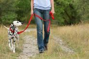 Jak nauczyć psa chodzenia na smyczy? Wyjaśniamy krok po kroku