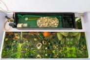 Jak dobrać filtr do akwarium? Wyjaśniamy krok po kroku