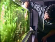 Jak zwalczać okrzemki w akwarium? Praktyczny poradnik
