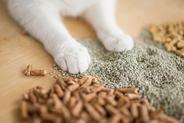 Kuweta i żwirek dla kota - jak sobie poradzić z wyborem?