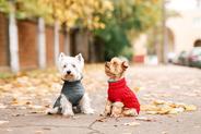Jak zrobić ubranko dla psa - poradnik praktyczny krok po kroku
