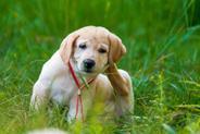 Świerzb u psa (świerzbowiec) – opis, przyczyny, zdjęcia, leczenie