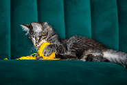 Najlepsze zabawki dla kota, które pokocha każdy pupil!