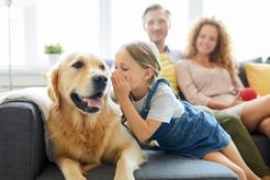 Jak namówić rodziców na psa? 8 najlepszych argumentów