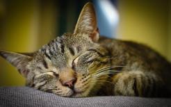 Ile śpi kot? Zobacz, jak długo potrafią spać koty w ciągu doby
