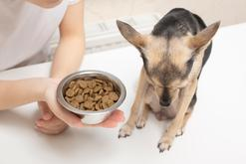 Brak apetytu u psa – 6 powodów, przez które pies nie chce jeść