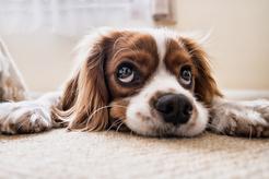 Jak dobrać karmę dla psów?