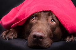 Dlaczego pies się trzęsie? 5 najczęstszych przyczyn drżenia ciała u psa