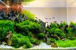 Jak wyklarować wodę w akwarium? Praktyczny poradnik