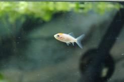 Mętna woda w akwarium - przyczyny, oczyszczenie, zapobieganie zabrudzeniom wody