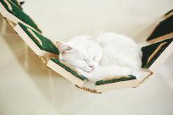 Półki dla kota - rodzaje, ceny, sposób montażu, ceny