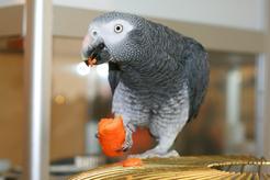 Karma dla papug – rodzaje, skład, cena, opinie, porady żywieniowe